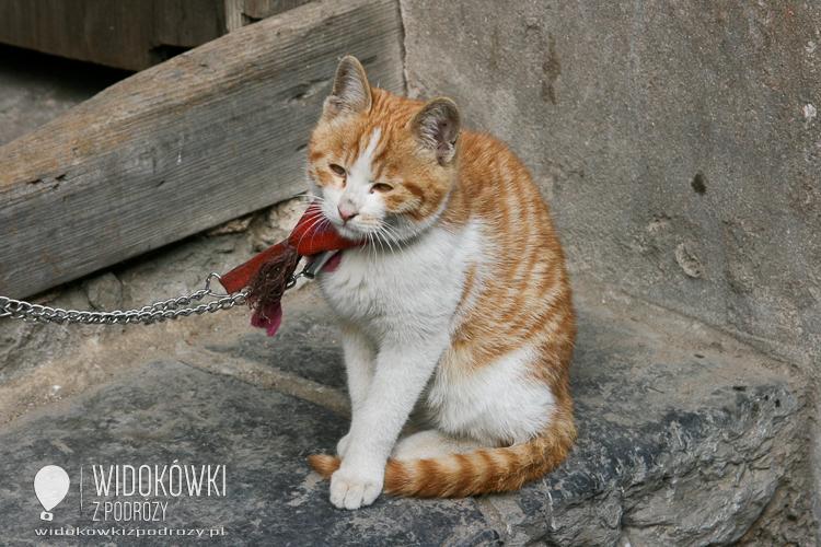 The cat guard. Guilin. China.