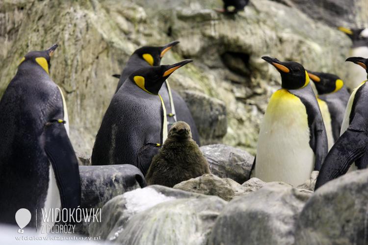 Penguins island. Loro Parque.
