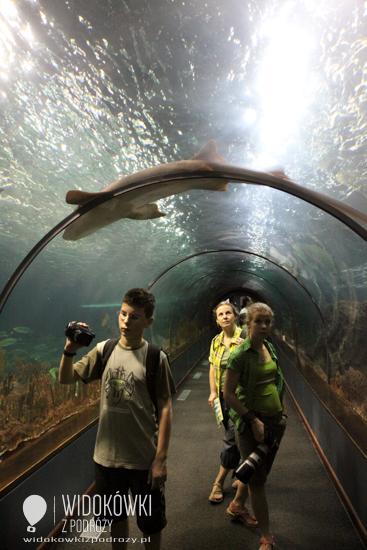 Underwater glass tunnel. Loro Park.