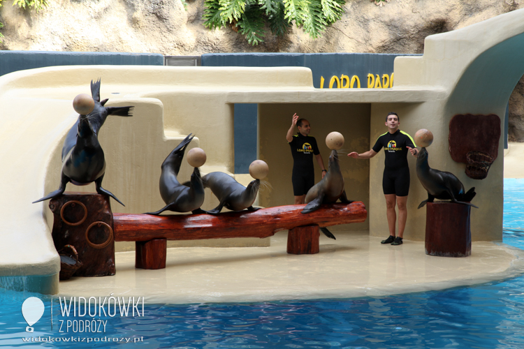 The performance of seals. Loro Park.