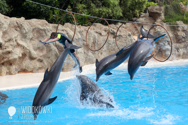 The performance of dolphins. Loro Park.