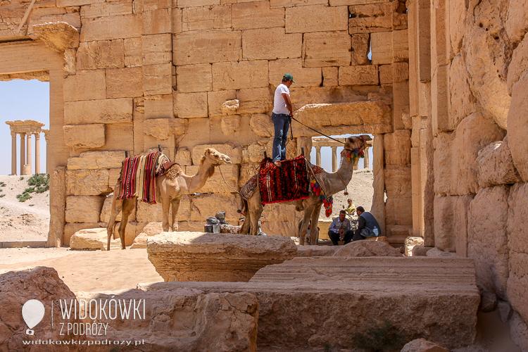 Palmyra can also visit the camel. Palmyra 2008.