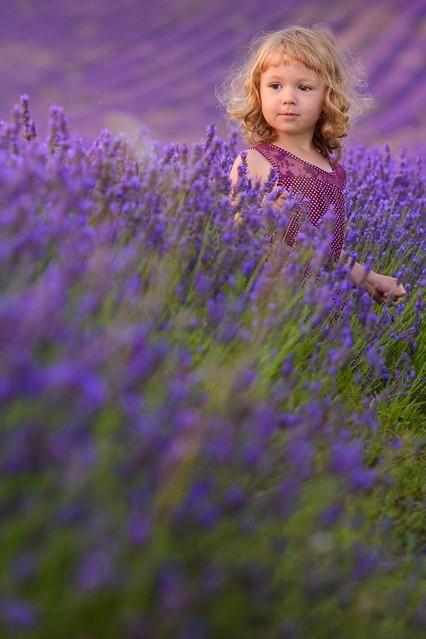 Lavender Dreams Pafcio #267245