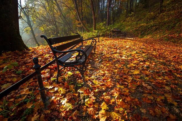 Park jesienią Fotografia w Ojcowskim Parku Narodowym MR86