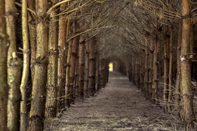 Leśne wędrówki Aneta Konik #276111
