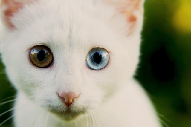 Kicia Ukochany kotek który zaginął :( jari12 #276276