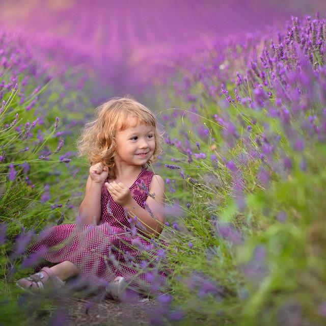 Lavender Dreams Pawel Prus #267232