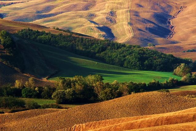 w porannym słońcu Toskanii Picasa #265375
