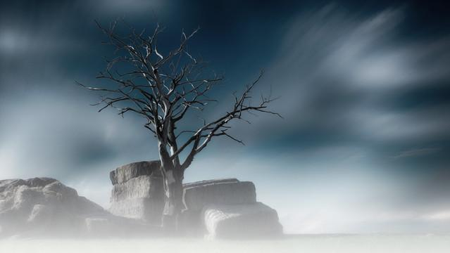 Tree robertp #263617