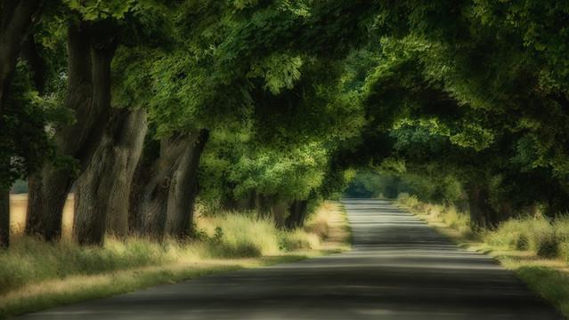 the road... Robert Powroznik #278680