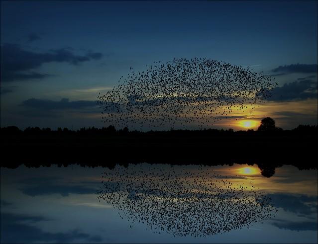 Ptaki... Vviktoria #261723