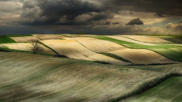 fields of light robertp #267242