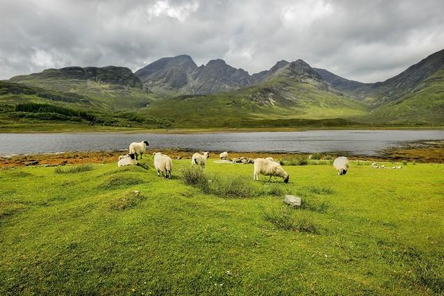 Wypas Szkocja JAN SIEMINSKI #281131