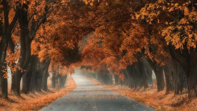 Autumn Trees Robert Powroznik #263264