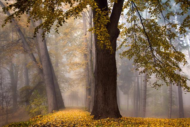 Wpis jesienny Aneta Konik #264629