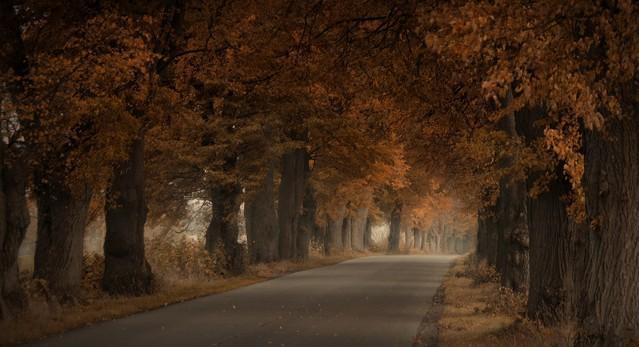 Złota smuga jesieni... Vviktoria #283578