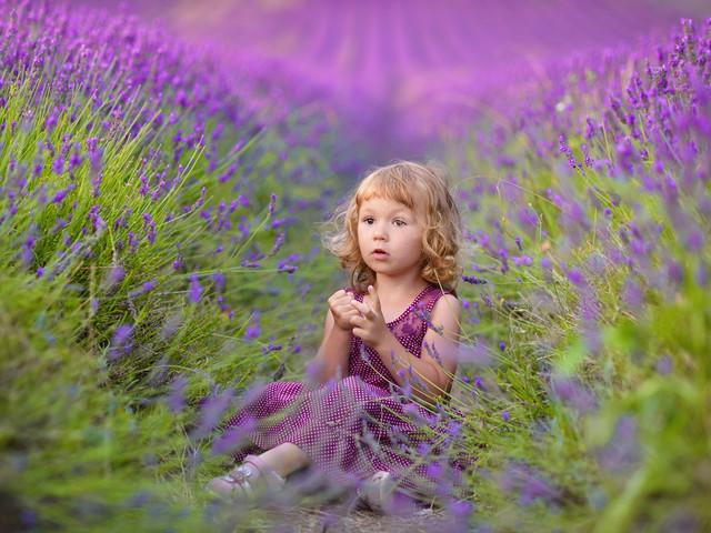 Lavender Dreams Pawel Prus #269294